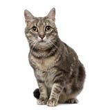 Gato (criança de 4 anos) Foto de Stock Royalty Free