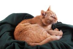Gato Cuddly fotos de stock royalty free