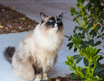 Gato curiosamente que mira las plantas Fotografía de archivo