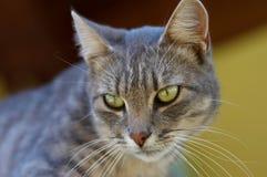 Gato curioso Imagens de Stock Royalty Free