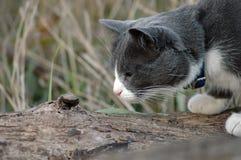 Gato curioso foto de archivo libre de regalías