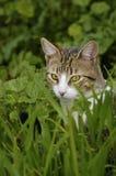Gato curioso Imagens de Stock