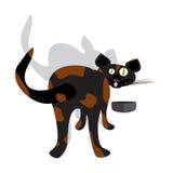 Gato curioso Imagen de archivo