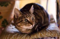 Gato curioso 2 Fotos de archivo
