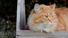 Gato curioso do gengibre no jardim na toca filme