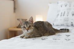 Gato curioso en la cama Fotografía de archivo libre de regalías