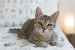 Gato curioso en la cama Fotos de archivo