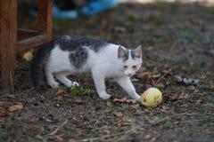 Gato curioso engraçado com maçã foto de stock