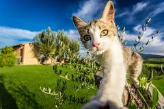 Gato curioso no campo, Toscânia imagens de stock