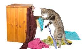 Gato curioso rummaging en un cajón Imagen de archivo libre de regalías