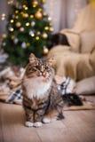 Gato, días de fiesta del Año Nuevo, la Navidad, árbol de navidad Fotografía de archivo libre de regalías