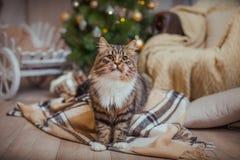 Gato, días de fiesta del Año Nuevo, la Navidad, árbol de navidad Fotos de archivo libres de regalías