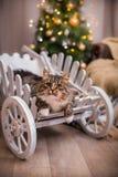 Gato, días de fiesta del Año Nuevo, la Navidad, árbol de navidad Imagen de archivo