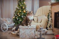 Gato, días de fiesta del Año Nuevo, la Navidad, árbol de navidad Imagen de archivo libre de regalías