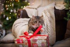 Gato, días de fiesta del Año Nuevo, la Navidad, árbol de navidad Imagenes de archivo