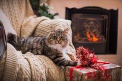 Gato, días de fiesta del Año Nuevo, la Navidad, árbol de navidad Foto de archivo libre de regalías