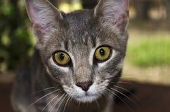 gato 3d Fotografía de archivo libre de regalías