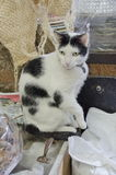 Gato da adega Fotografia de Stock