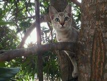 Gato da aranha Foto de Stock Royalty Free
