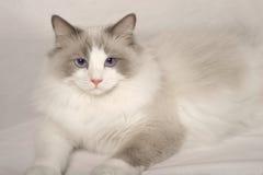 Gato da boneca de pano Imagem de Stock Royalty Free
