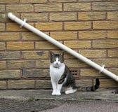 Gato da calha Fotos de Stock