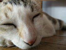 Gato da cara Fotografia de Stock