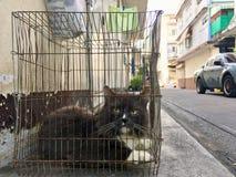 Gato da casa em uma gaiola, travada acima pelo proprietário foto de stock royalty free