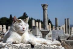Gato da cidade antiga Fotos de Stock Royalty Free