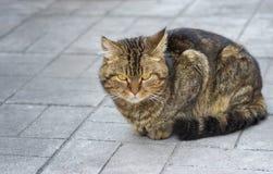 Gato da cidade que senta-se em um pavimento Fotos de Stock Royalty Free