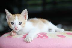 Gato da criança Imagem de Stock Royalty Free