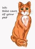 Gato da ilustração para anunciar dos produtos para animais e veterinário Imagens de Stock Royalty Free