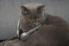 Gato da música Foto de Stock Royalty Free