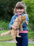 Gato da mo?a e do animal de estima??o imagens de stock