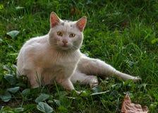 Gato da rua Imagem de Stock