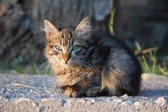 Gato da rua Foto de Stock Royalty Free