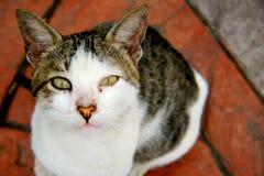Gato da rua Imagens de Stock