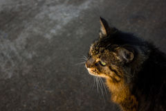 Gato da rua Fotografia de Stock