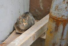 Gato da rua com olhos verdes fotografia de stock royalty free
