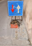 Gato da rua do sono Foto de Stock