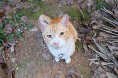 Gato da rua em casa Imagens de Stock Royalty Free