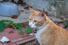 Gato da rua em casa Fotos de Stock Royalty Free