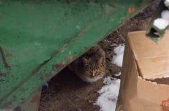 Gato da rua no lixo Imagens de Stock