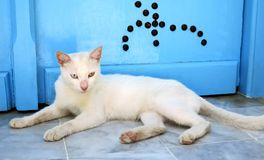 Gato da rua que descansa perto da porta em Sidi Bou Said Tunisia imagens de stock royalty free