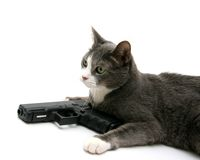 Gato da segurança Foto de Stock