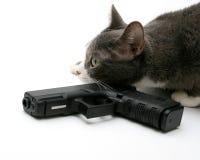 Gato da segurança Imagem de Stock