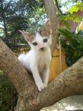 Gato da vaquinha na árvore Fotografia de Stock Royalty Free