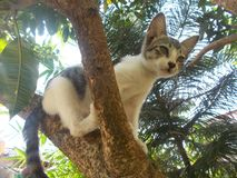 Gato da vaquinha na árvore 2 Foto de Stock Royalty Free