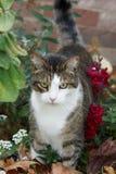 Gato da vaquinha na cama de flor Imagens de Stock