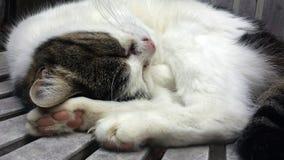 Gato da vizinhança Fotografia de Stock Royalty Free