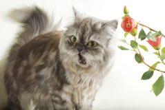 Gato dado una sacudida eléctrica Fotos de archivo libres de regalías